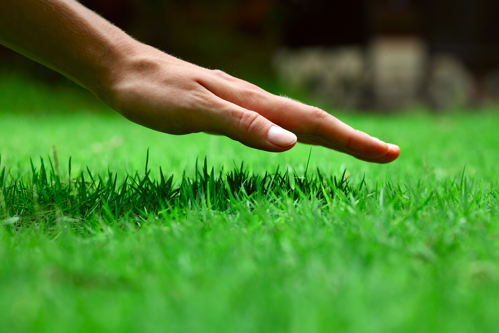 Hand about to touch the lush and well maintained grass of a garden. Lawn Care services from £18